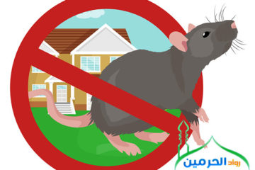 شركة مكافحة فئران بجدة