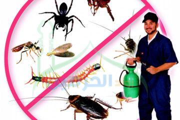 شركة مكافحة الحشرات والقوارض بالرياض